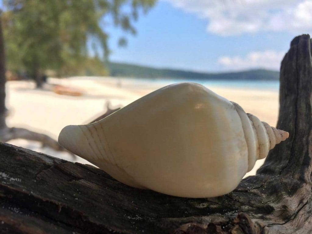 A Shell on Koh Rong Island in Cambodia